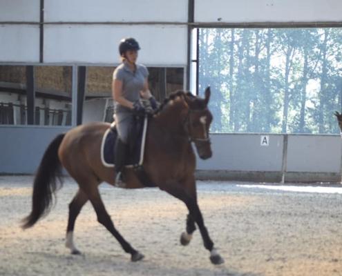 stable16_binnenpiste_manege_pepingen